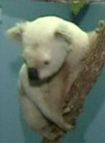 Animal foi encontrado pela polícia no leste da Austrália